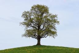 tree-740901_1920